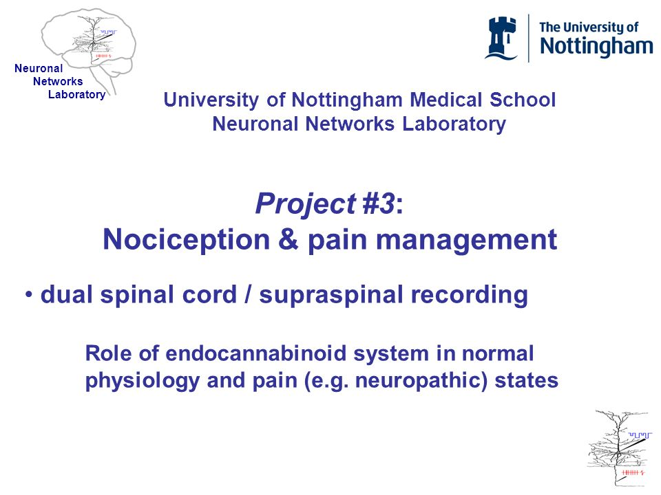 Project #3: Nociception & pain management