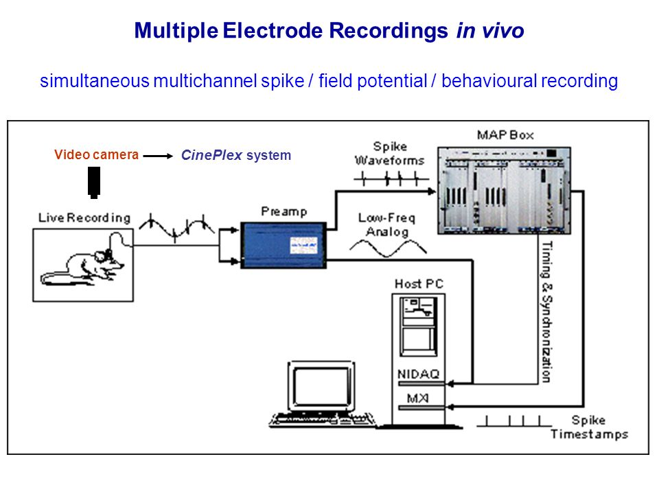Multiple Electrode Recordings in vivo