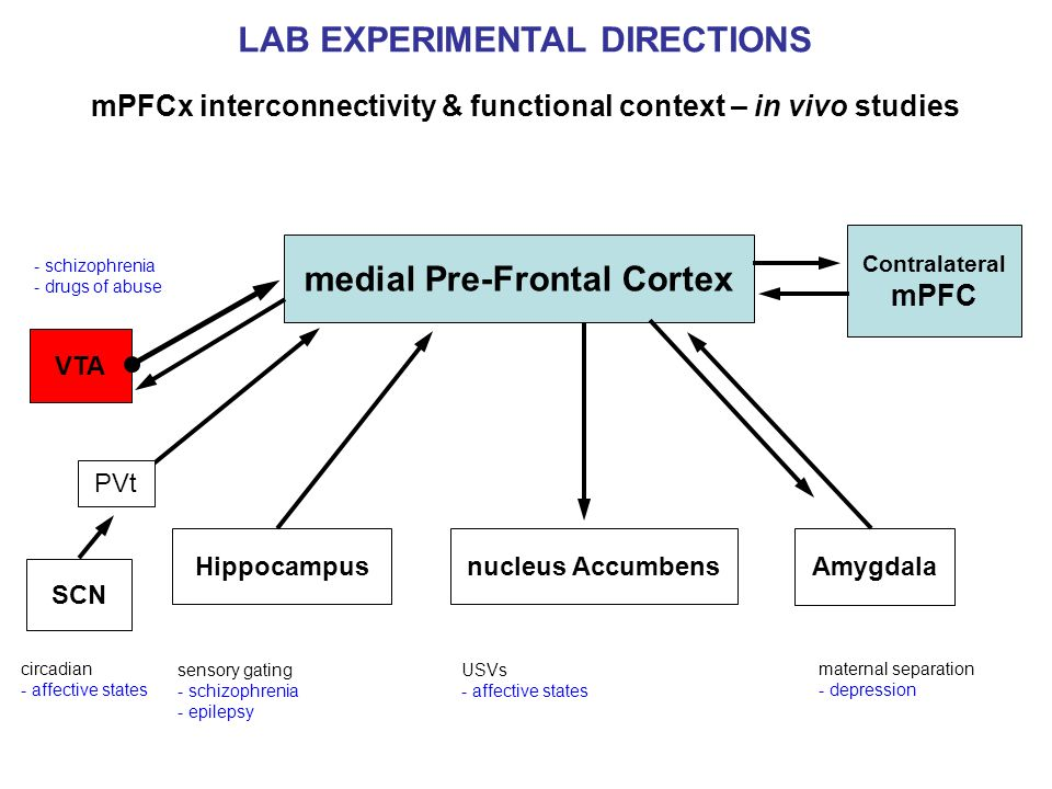 LAB EXPERIMENTAL DIRECTIONS medial Pre-Frontal Cortex