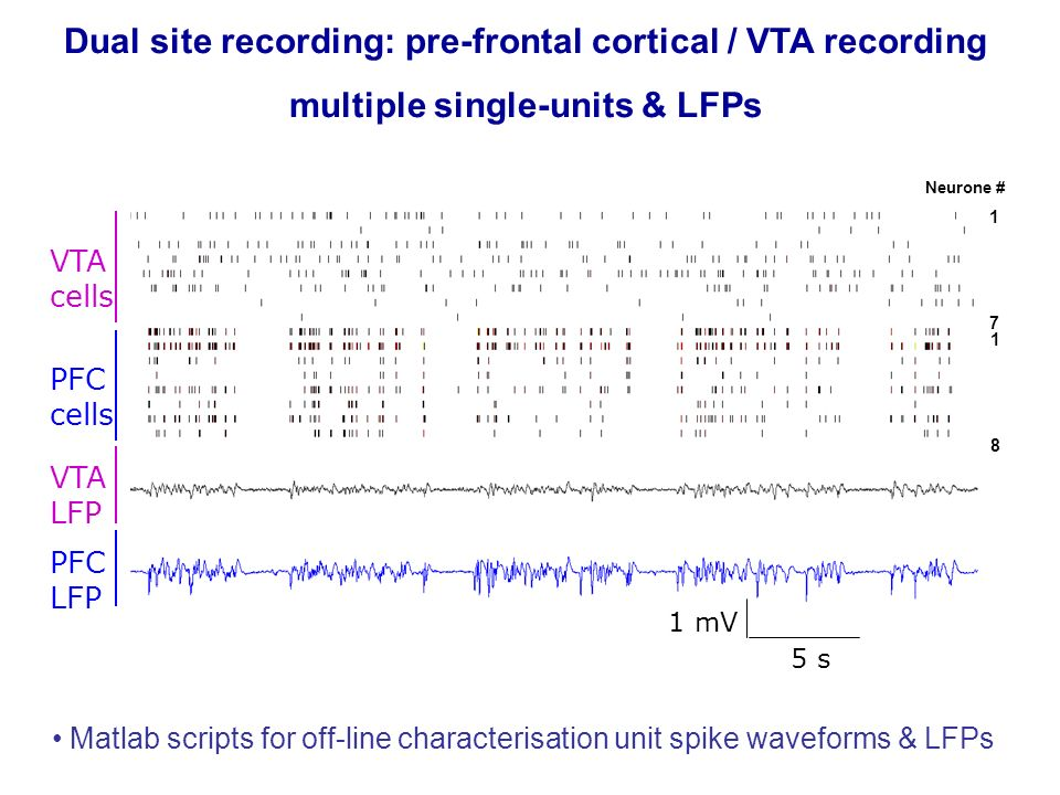 Dual site recording: pre-frontal cortical / VTA recording