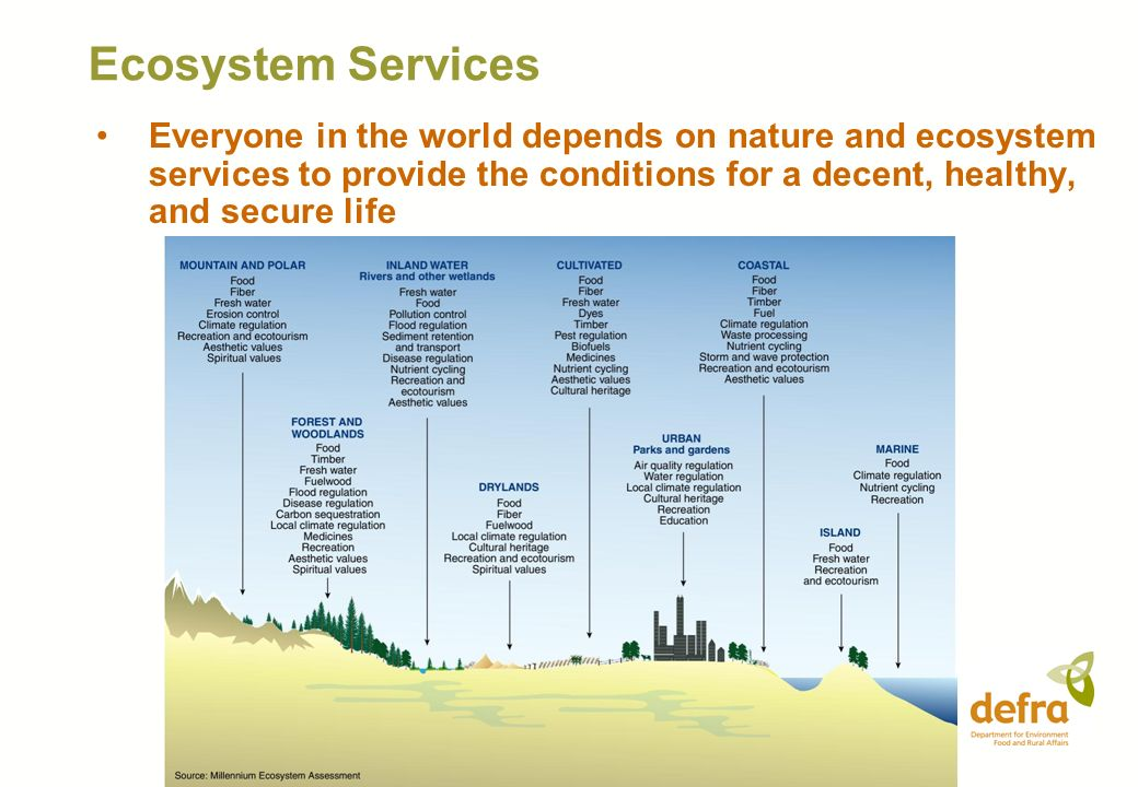 Ecosystem Services Everyone in the world depends on nature and ecosystem services to provide the conditions for a decent, healthy, and secure life.