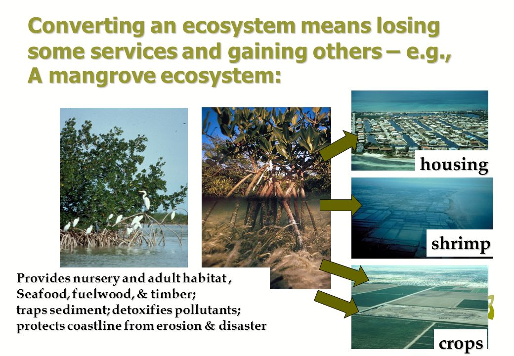 Converting an ecosystem means losing