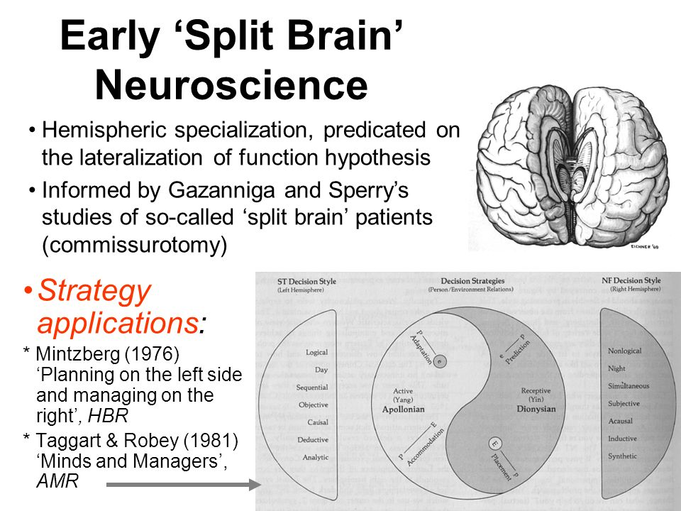 Early 'Split Brain' Neuroscience