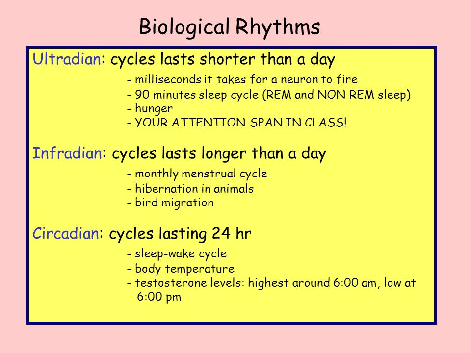 ultradian and infradian rhythms Another important biological rhythm is the infradian rhythm infradian rhythms last longer than 24 hours and can be weekly, monthly or annually.