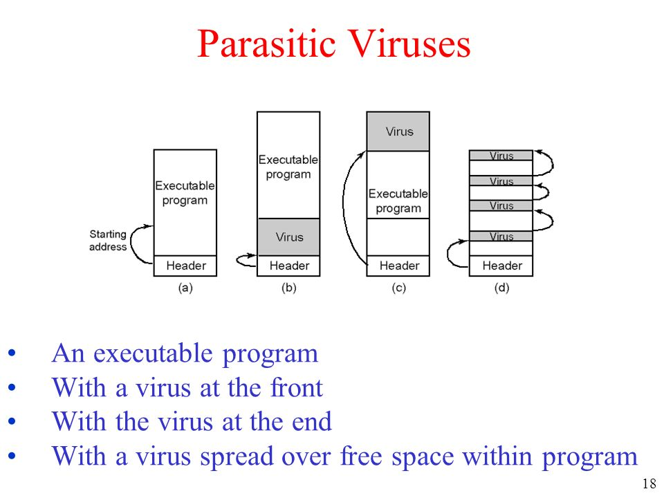 Parasitic Viruses An executable program With a virus at the front