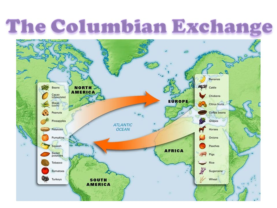 columbian exchange Technology the columbian exchange influenced technological advances in the late 15th and early 16th centuries europe was an economic and technological power compared to the native americans they encountered in the new world.