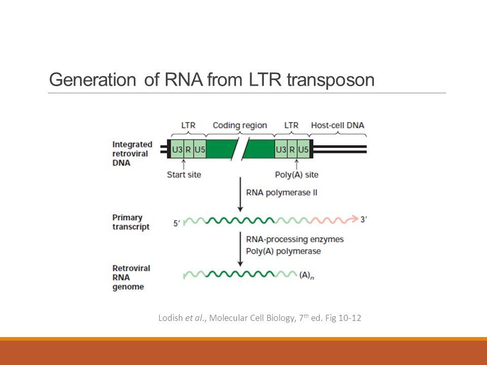 lodish molecular cell biology 7th pdf