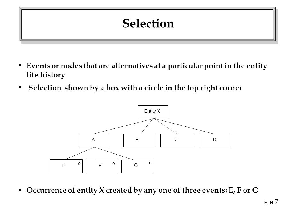 Selection Events or nodes that are alternatives at a particular point in the entity life history.