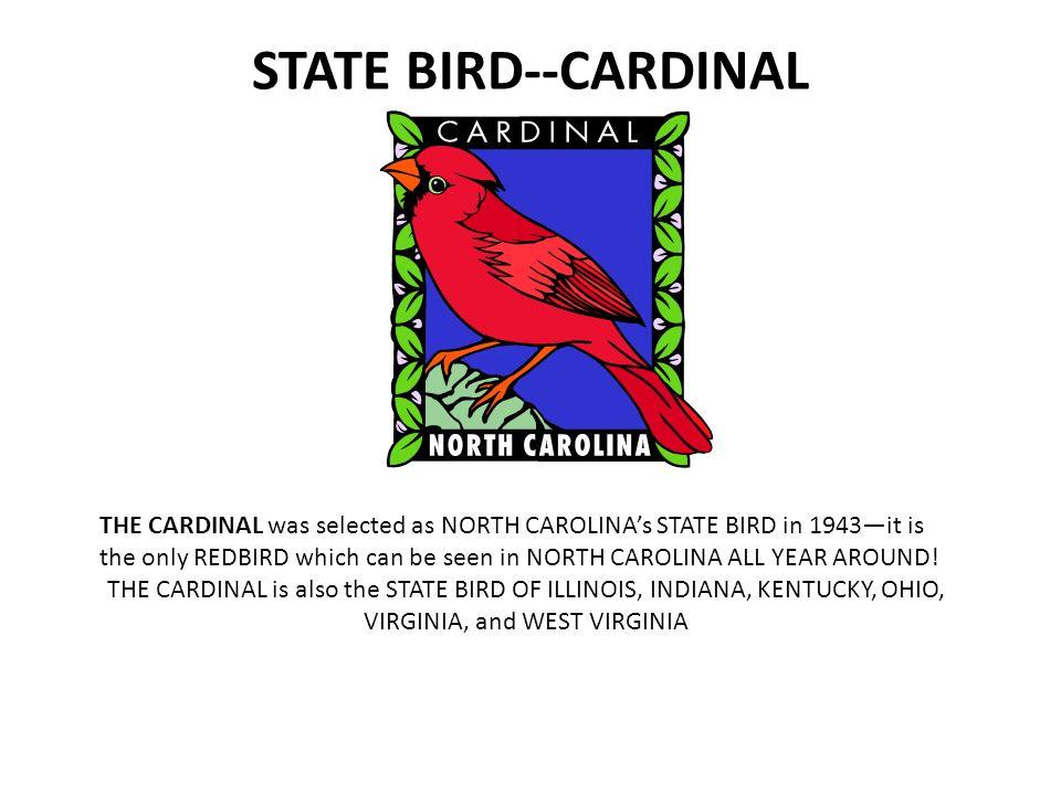 11 state bird cardinal