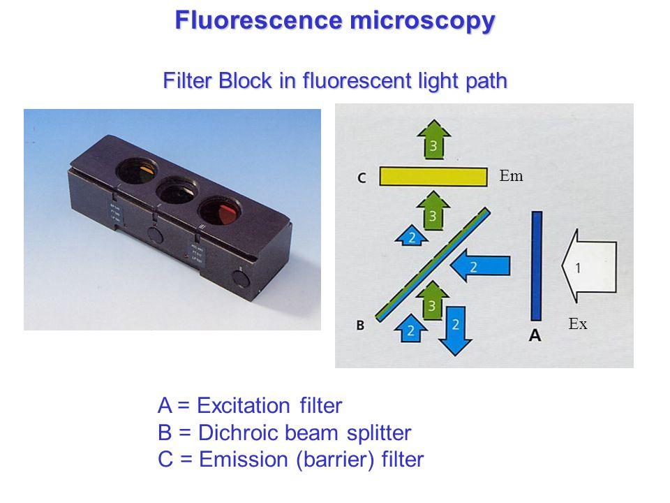 Fluorescence microscopy