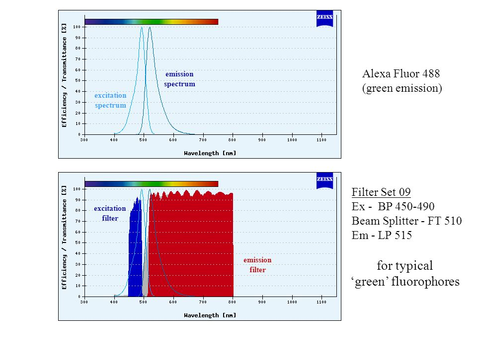 for typical 'green' fluorophores Alexa Fluor 488 (green emission)