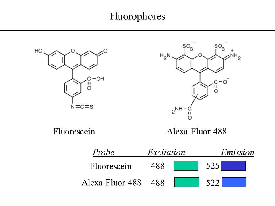 Fluorophores Alexa Fluor 488 488 522 Fluorescein Fluorescein 488 525