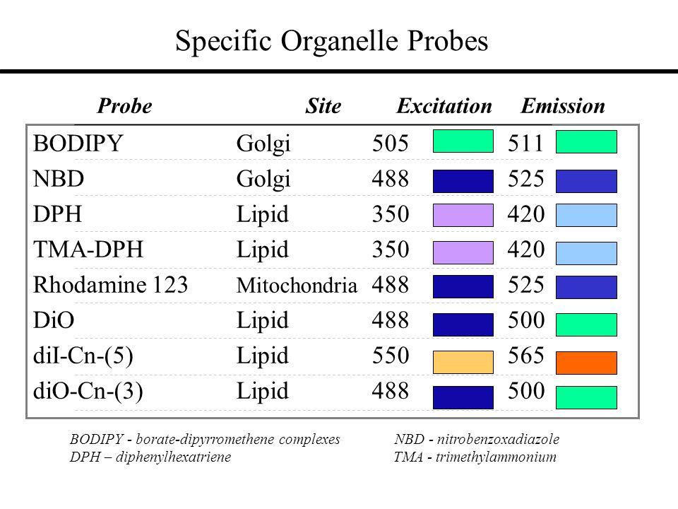 Specific Organelle Probes