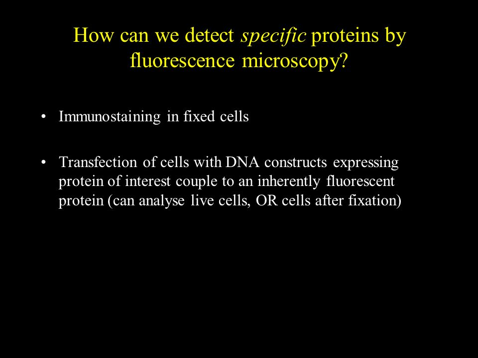 How can we detect specific proteins by fluorescence microscopy