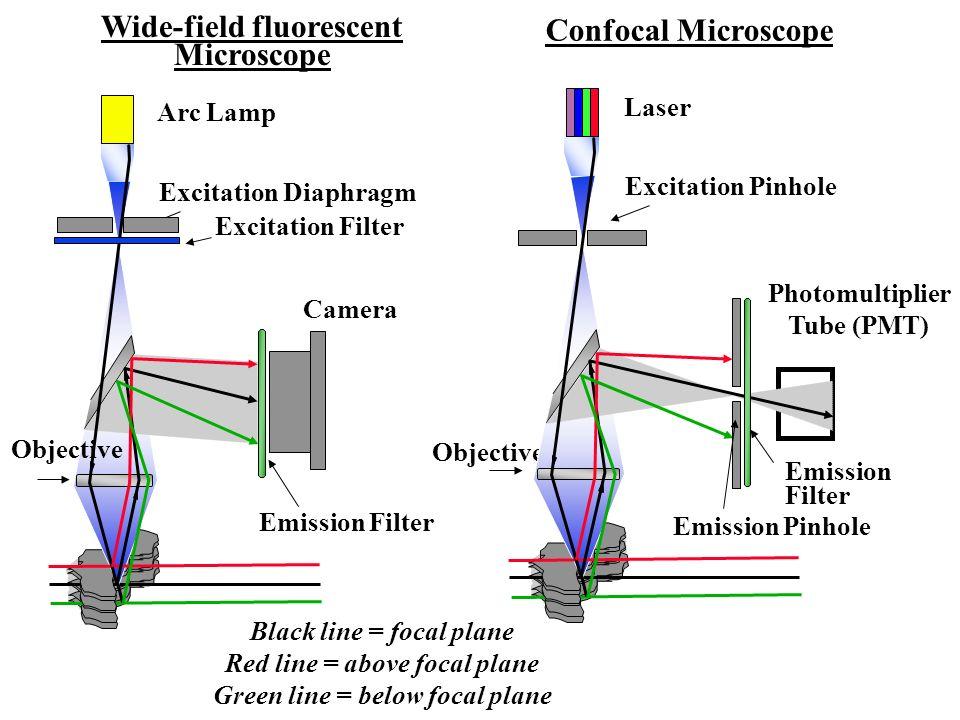 Confocal Microscope Wide-field fluorescent Microscope