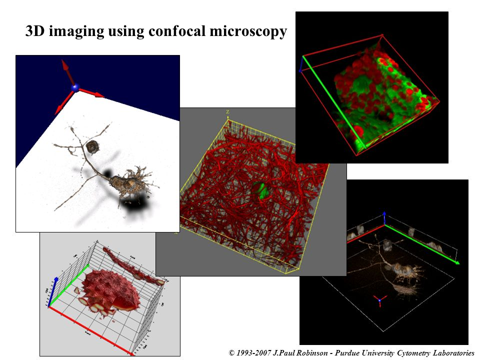 3D imaging using confocal microscopy
