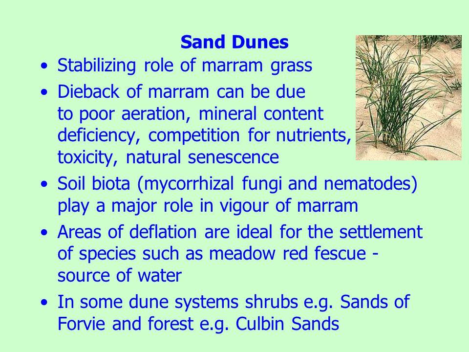 Sand Dunes Stabilizing role of marram grass.