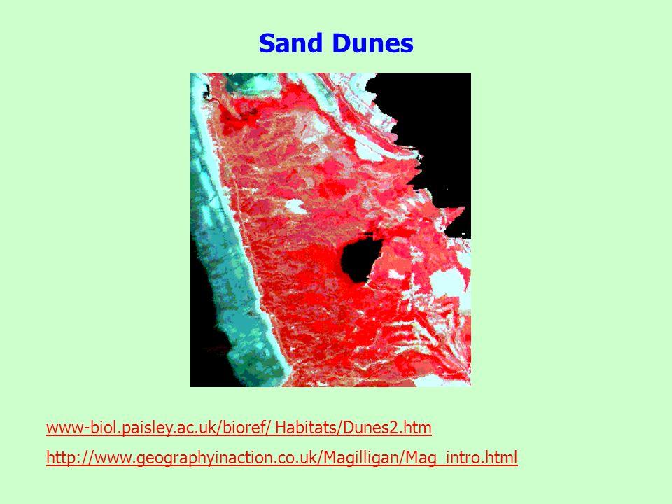 Sand Dunes www-biol.paisley.ac.uk/bioref/ Habitats/Dunes2.htm