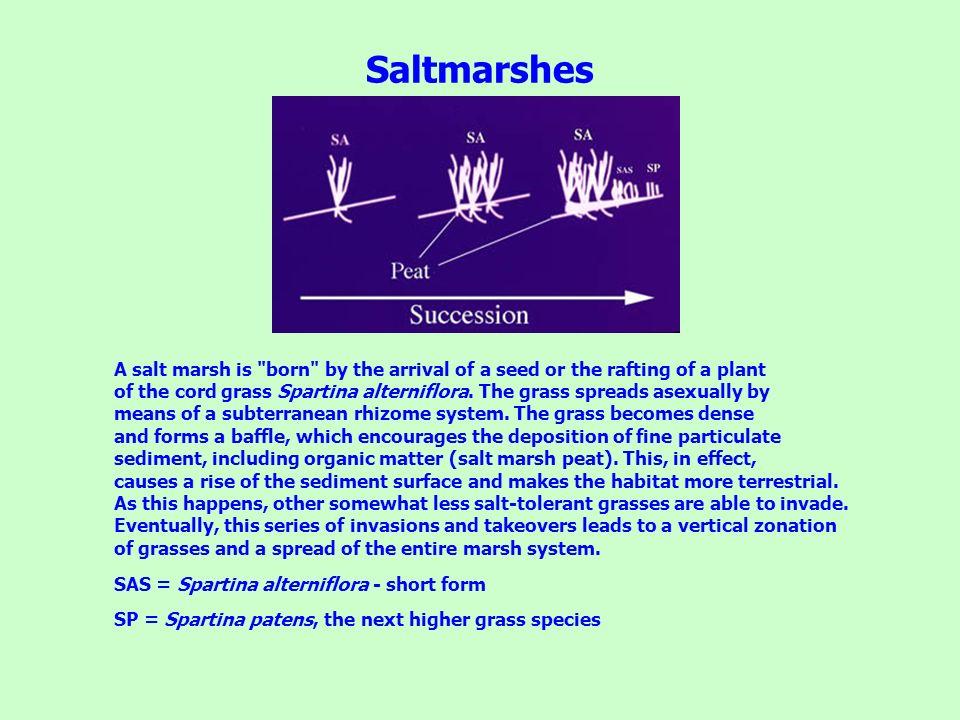 Saltmarshes