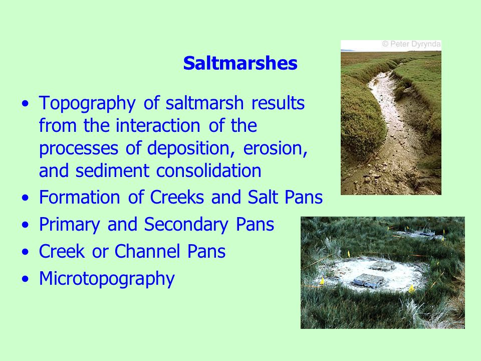 Saltmarshes Topography of saltmarsh results from the interaction of the processes of deposition, erosion, and sediment consolidation.