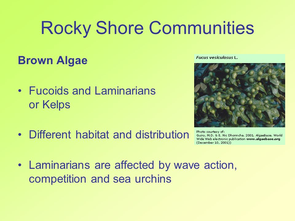 Rocky Shore Communities