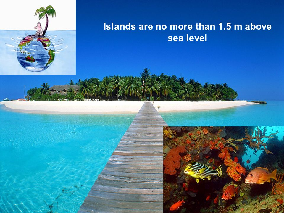 Islands are no more than 1.5 m above sea level
