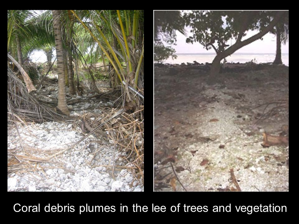 Coral debris plumes in the lee of trees and vegetation
