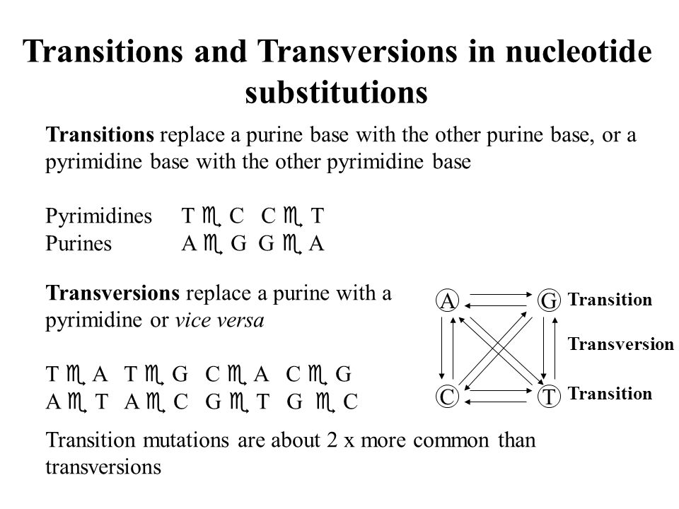 Transitions and Transversions in nucleotide substitutions
