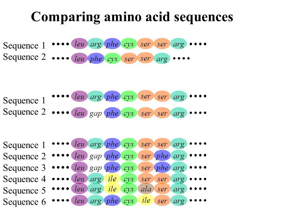 Comparing amino acid sequences