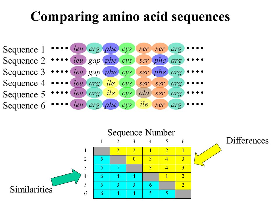 Comparing amino acid sequences