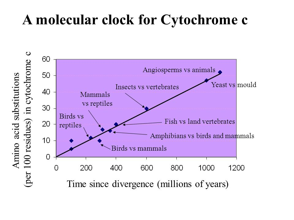 A molecular clock for Cytochrome c