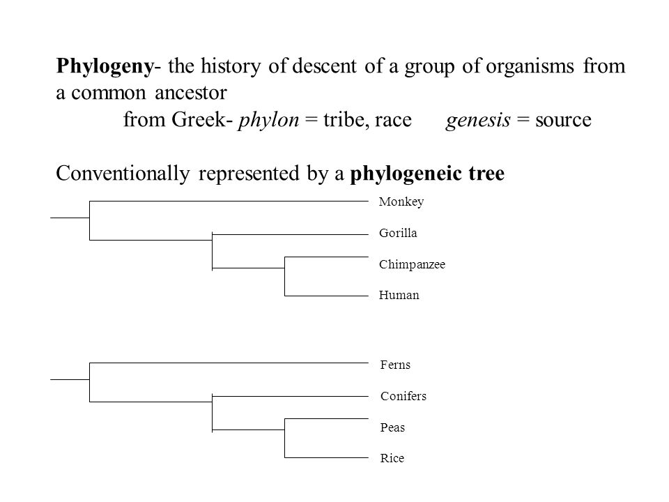 from Greek- phylon = tribe, race genesis = source