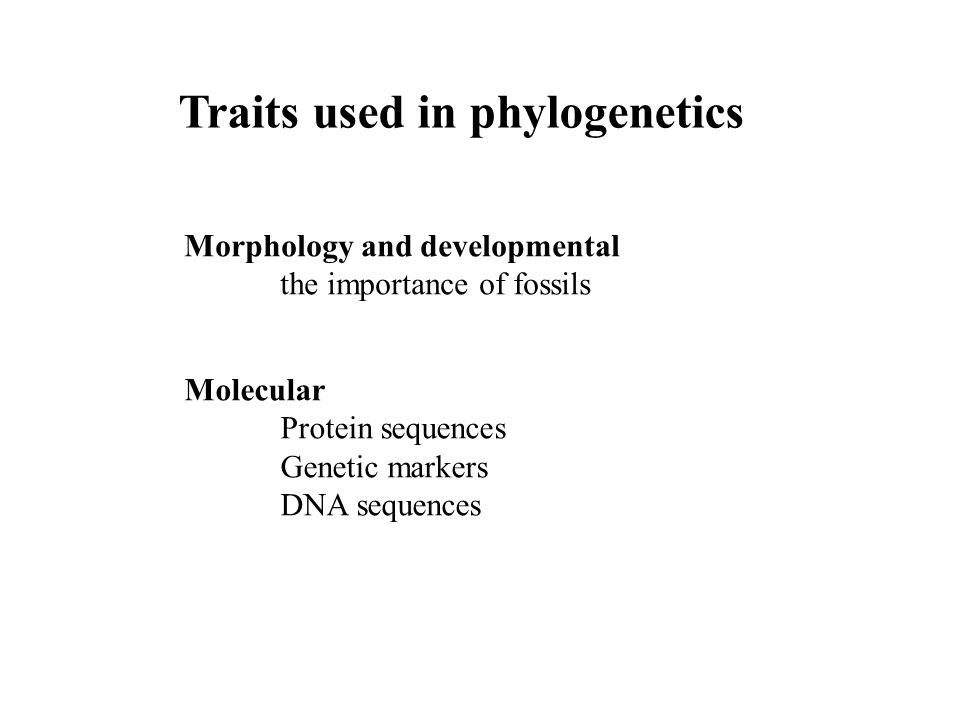 Traits used in phylogenetics