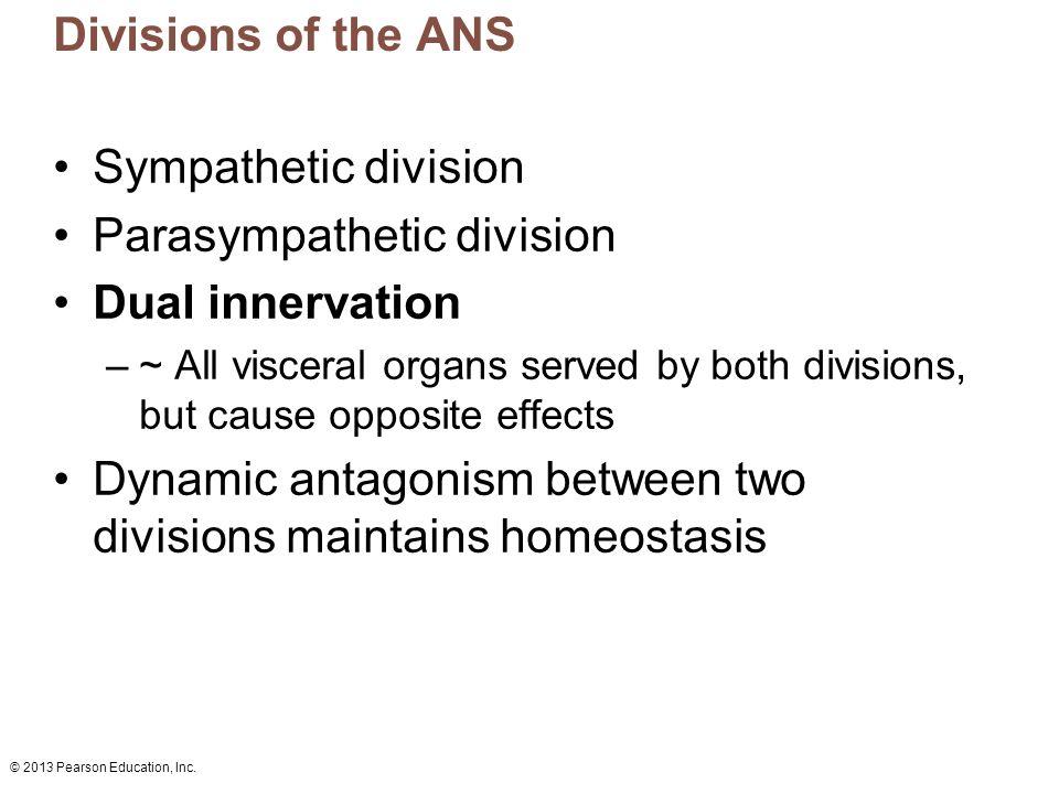 Parasympathetic division Dual innervation