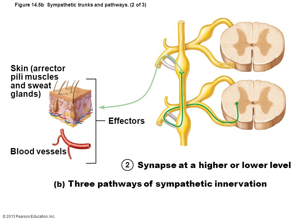 Synapse at a higher or lower level
