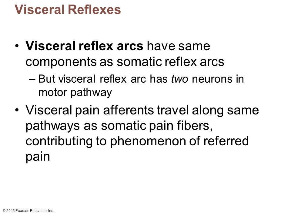 Visceral reflex arcs have same components as somatic reflex arcs