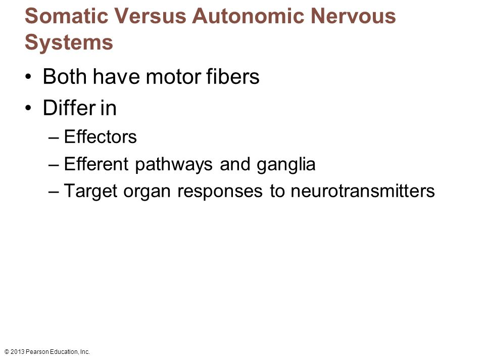 Somatic Versus Autonomic Nervous Systems