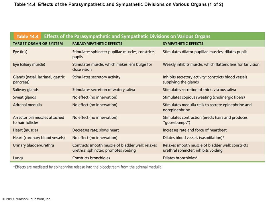 Table 14.4 Effects of the Parasympathetic and Sympathetic Divisions on Various Organs (1 of 2)