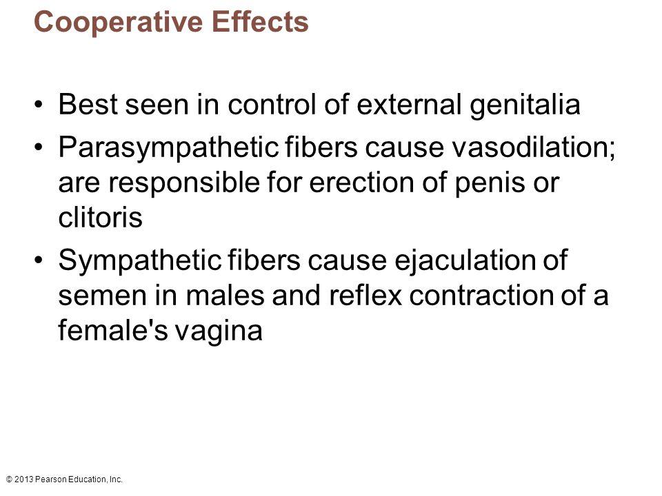 Best seen in control of external genitalia