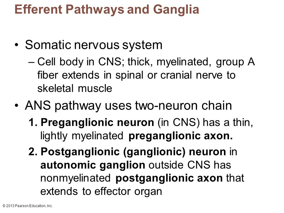Efferent Pathways and Ganglia