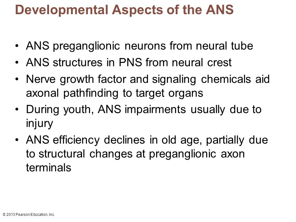 Developmental Aspects of the ANS