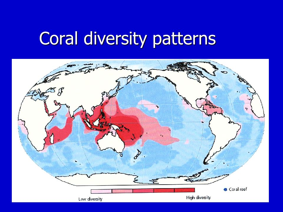 Coral diversity patterns