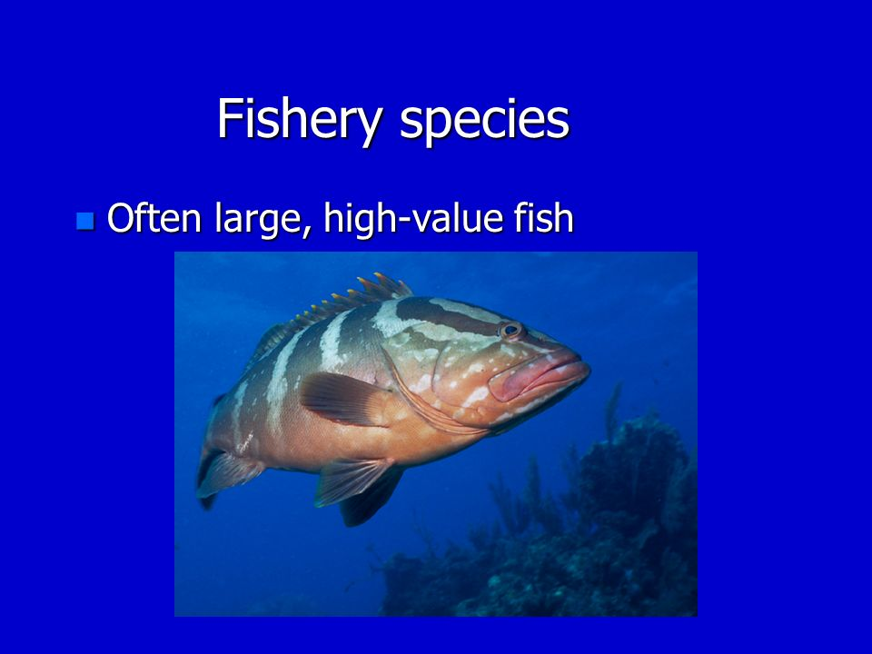 Fishery species Often large, high-value fish