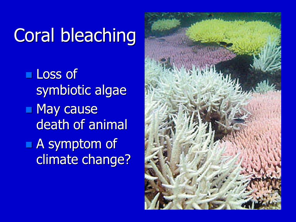 Coral bleaching Loss of symbiotic algae May cause death of animal