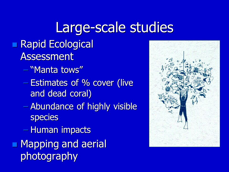 Large-scale studies Rapid Ecological Assessment