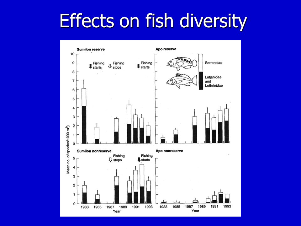 Effects on fish diversity