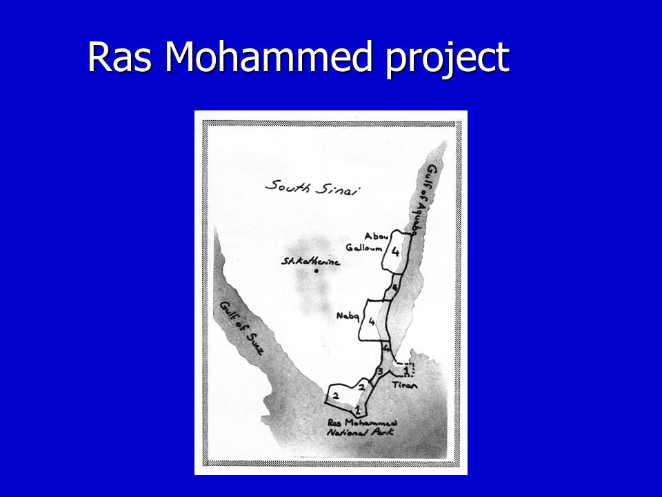 Ras Mohammed project