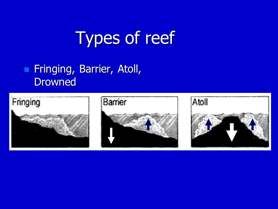 Types of reef Fringing, Barrier, Atoll, Drowned