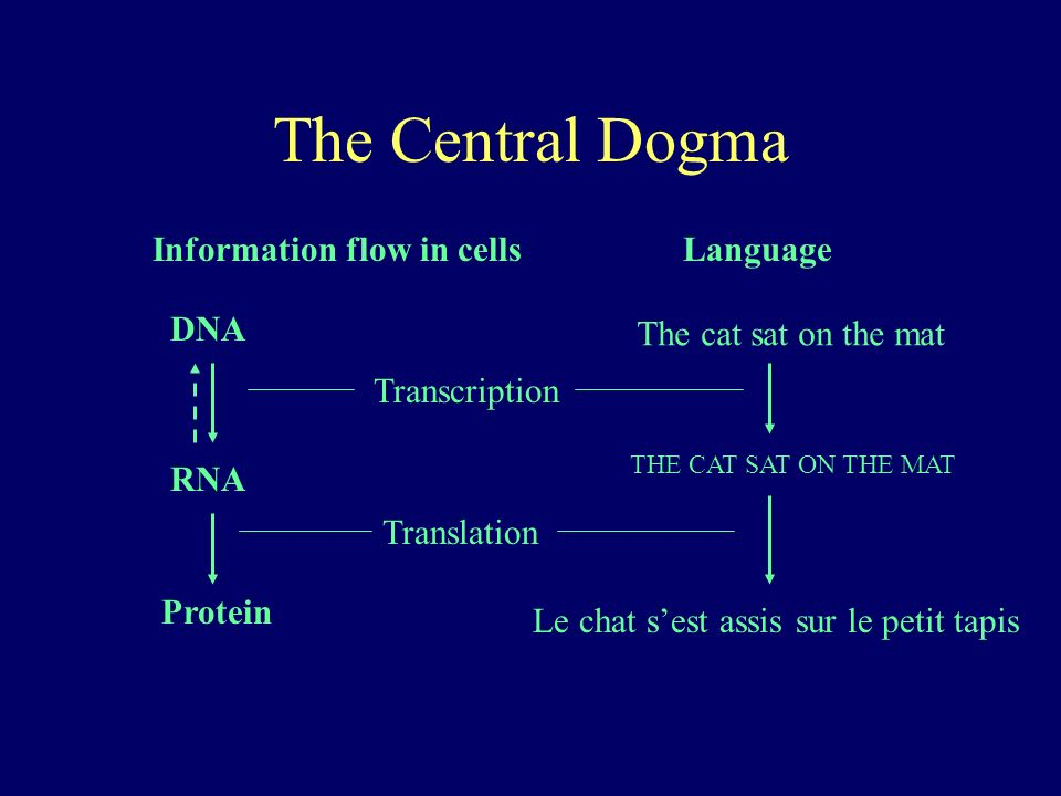 The Central Dogma Information flow in cells Language DNA