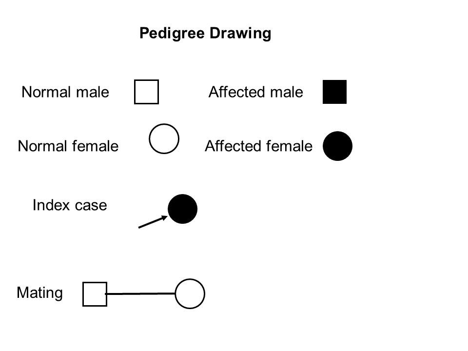 Pedigree Drawing Normal male Affected male Normal female Affected female Index case Mating